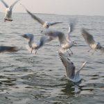 Nalsarovar Bird Sanctuary Travel Guide