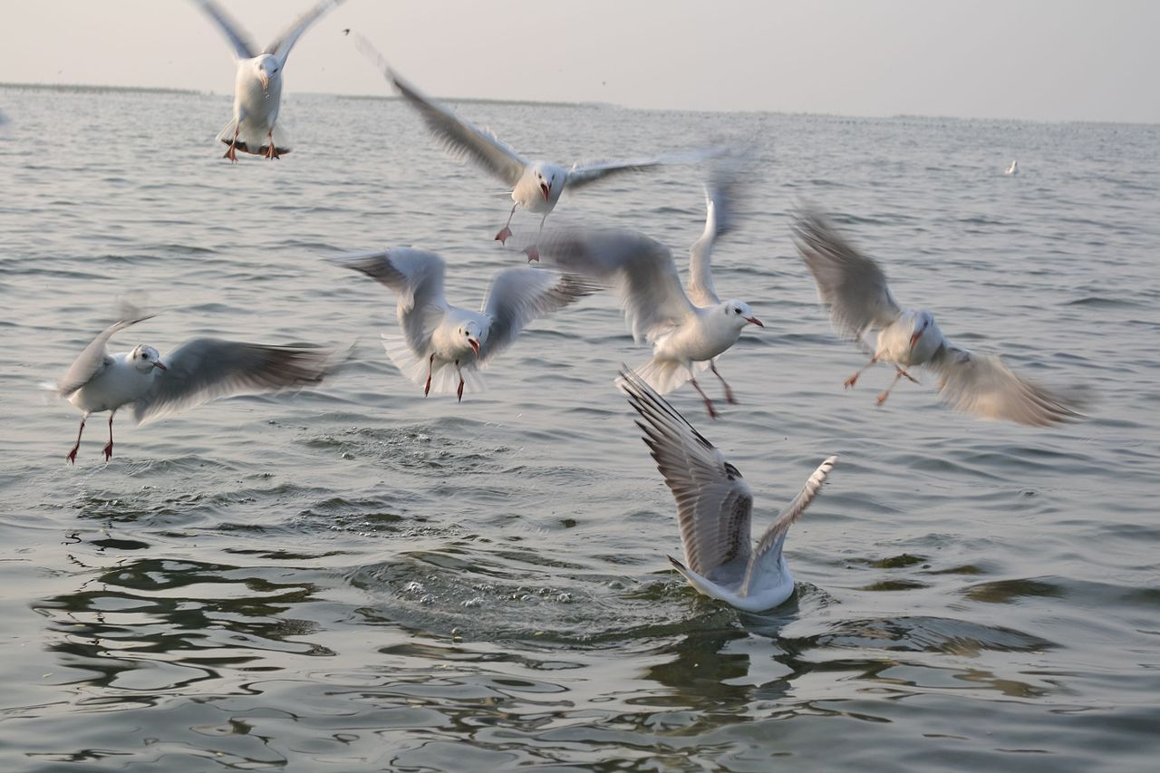 Nalsarovar Bird Sanctuary Travel Guide