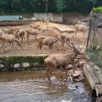 Nandanvan Zoo - Top-Rated Tourist Location in Raipur