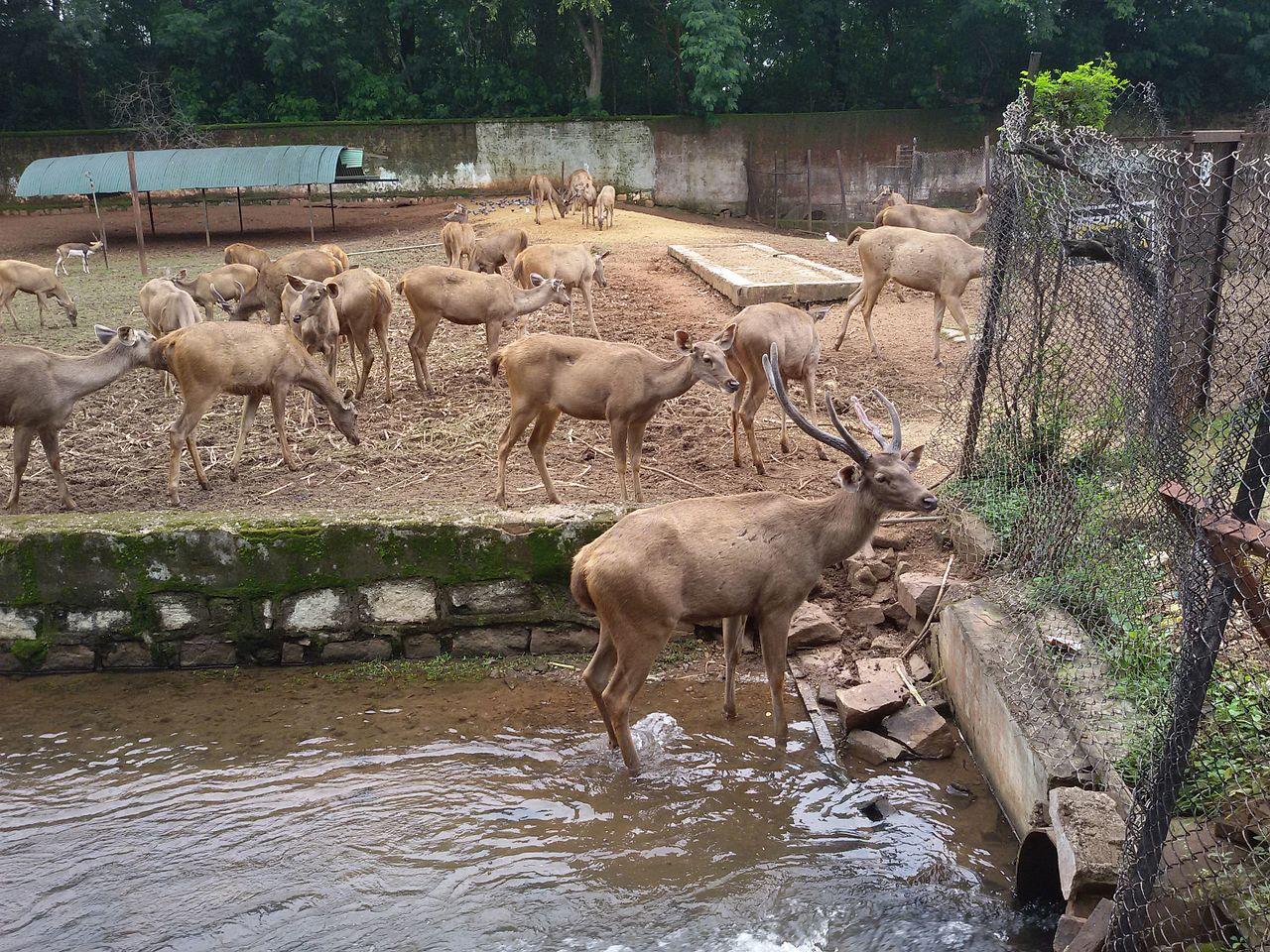 Nandanvan Zoo - Top-Rated Tourist Location in Raipur