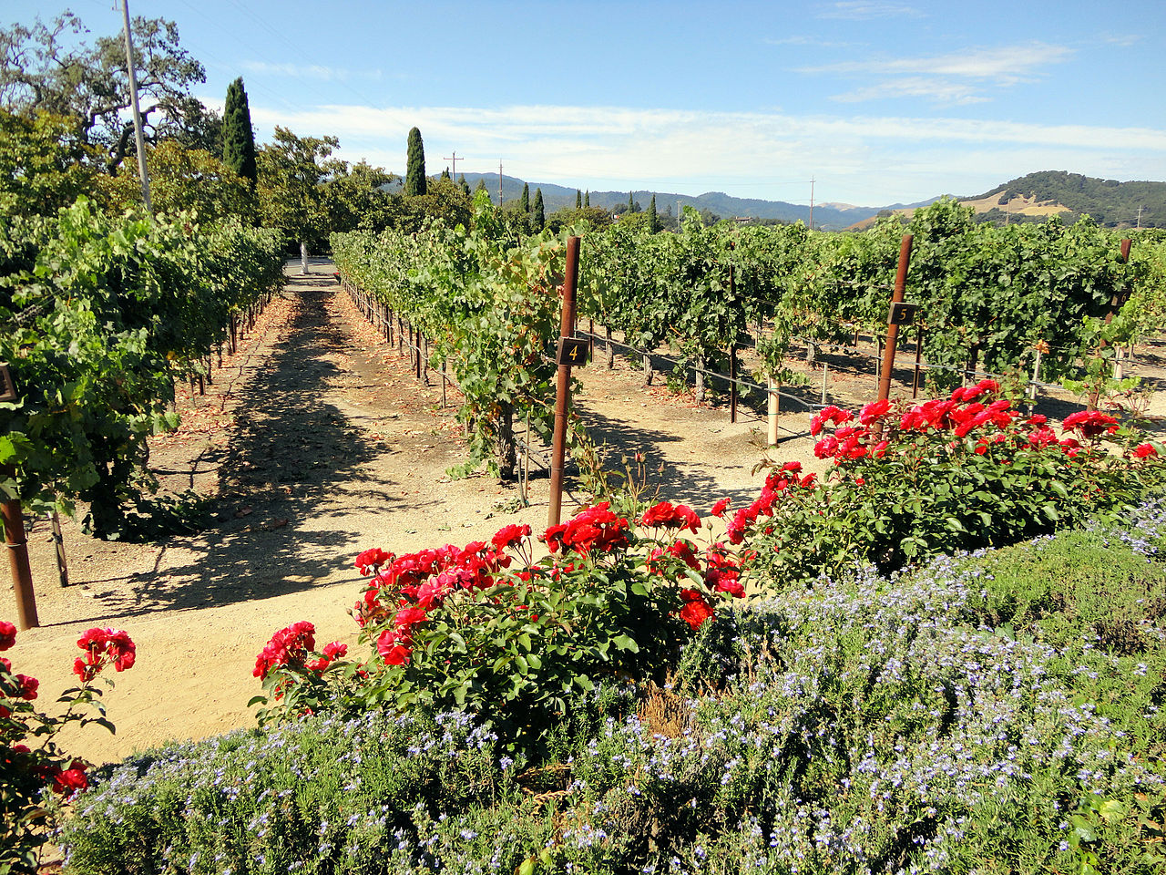 Beautiful Place to Visit In California-Napa Valley