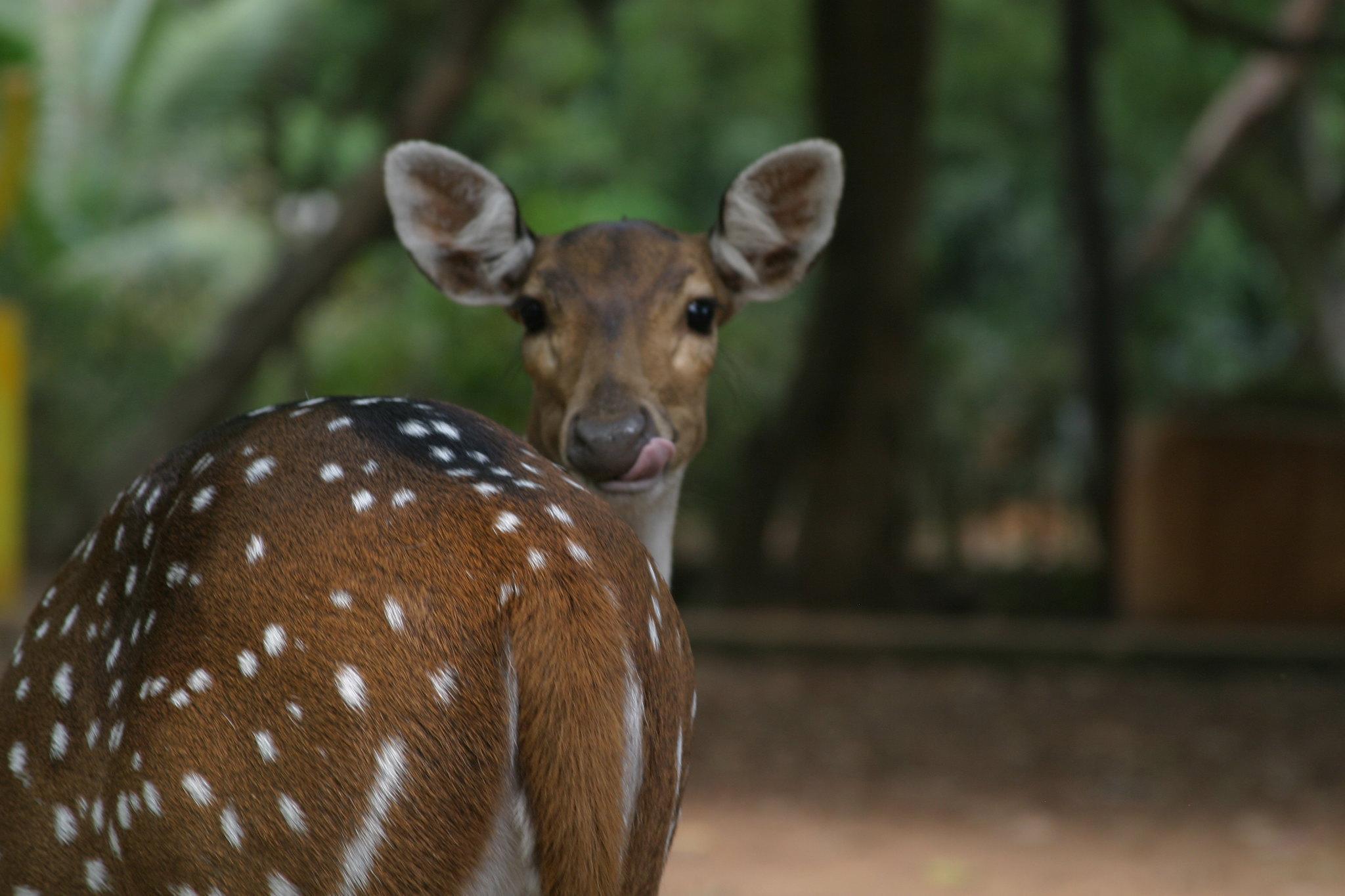 Best Ecotourism Destination In Tamil Nadu-National Deer Park