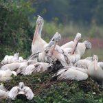 Nellapattu Sanctuary - Top Tourist Destination in Nellore