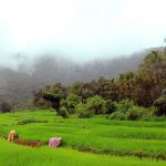 Top-Rated National Parks to Visit in Goa