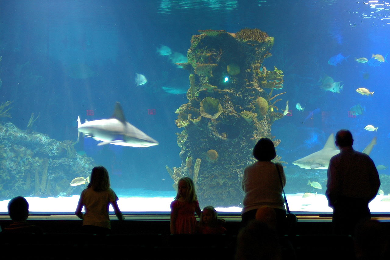 Must-Visit Attraction of Kentucky's-Newport Aquarium