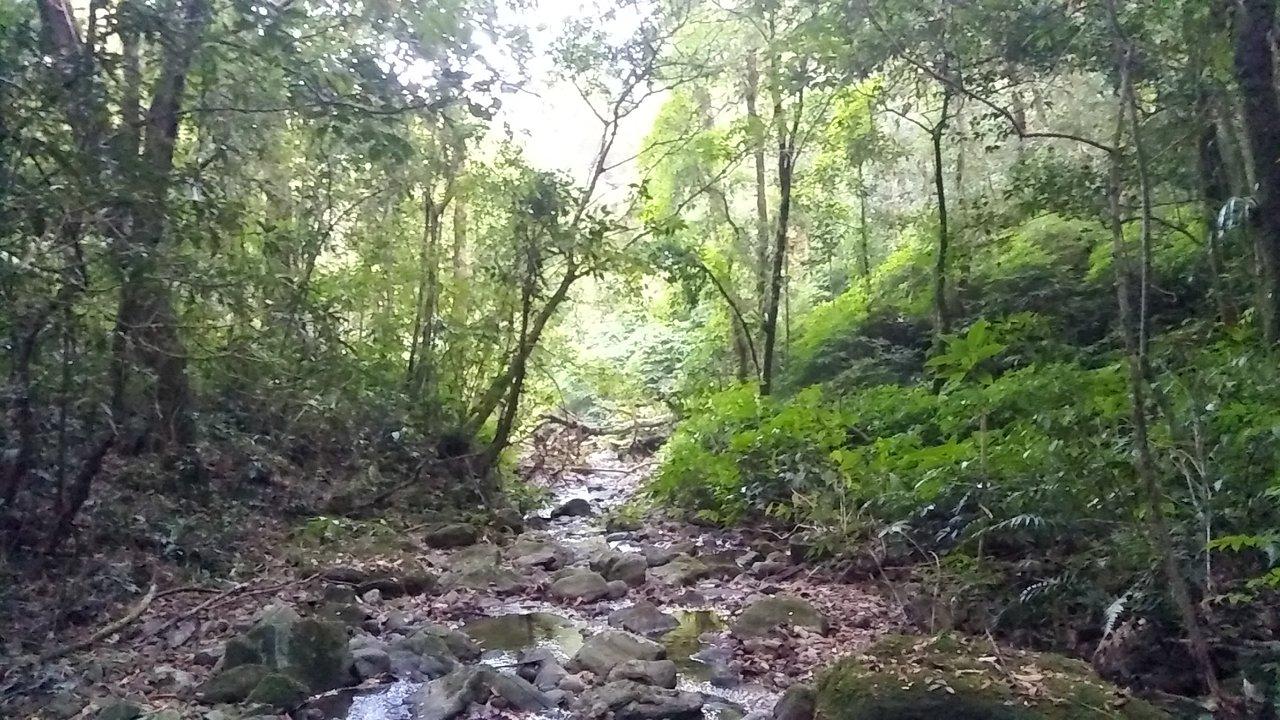 Best Visiting Place In Cherrapunji-Nokrek National Park