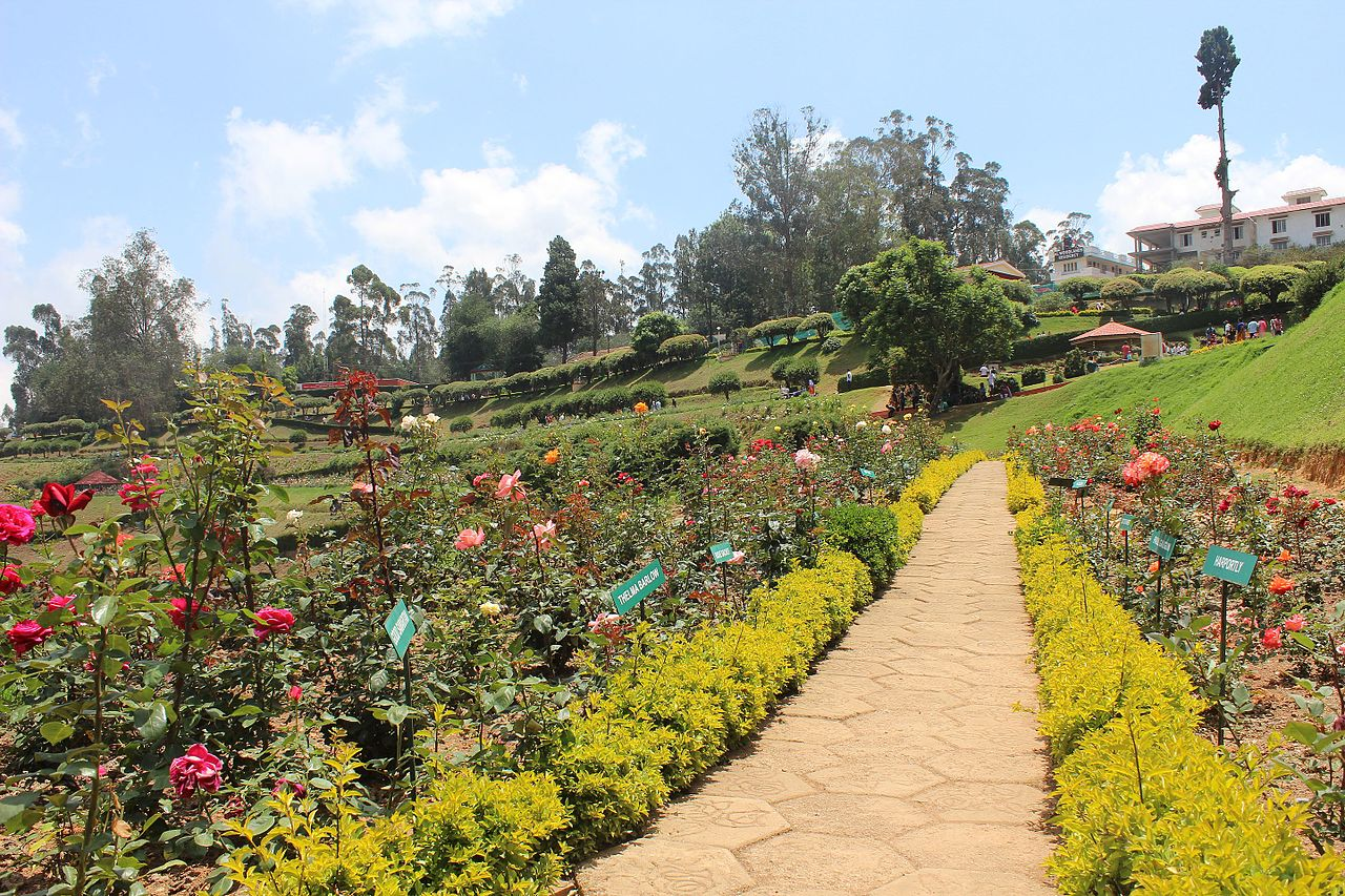 Enchanting Garden of Ooty (Udhagamandalam or Ootacamund)-Ooty Rose Garden