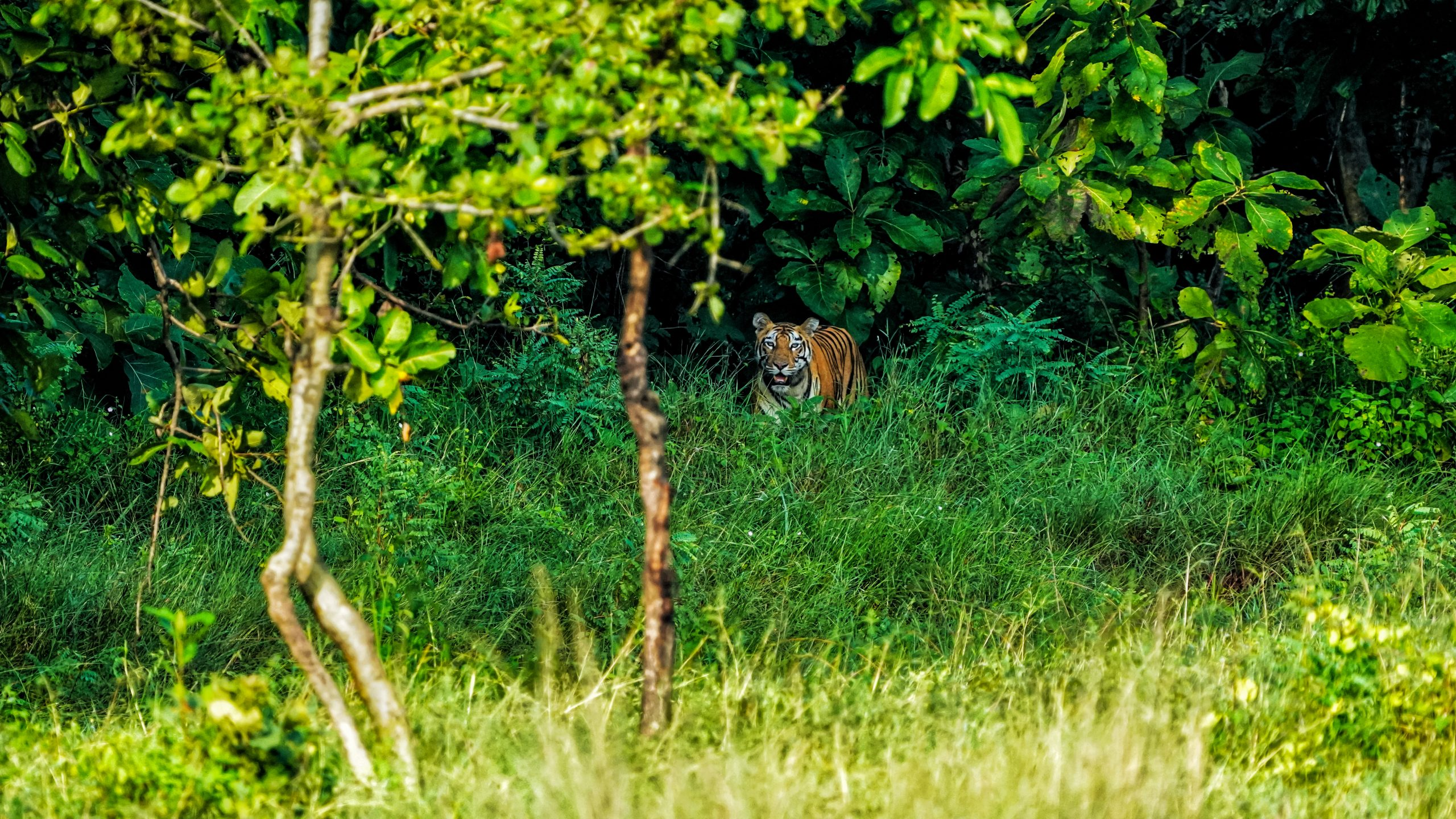 Amazing Wildlife Sanctuaries To Visit In Arunachal Pradesh-Pakhui Wildlife Sanctuary