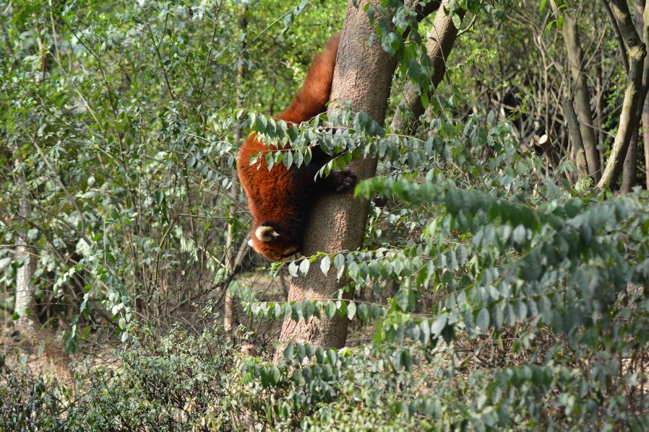 Pant Wildlife Sanctuary