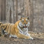 About Pench National Park