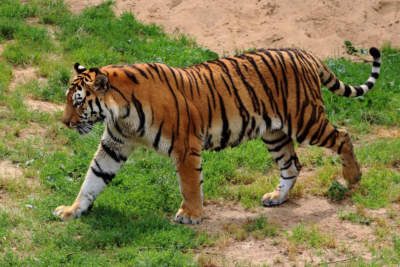 Weekend Trip Near Jabalpur-Pench Tiger Reserve