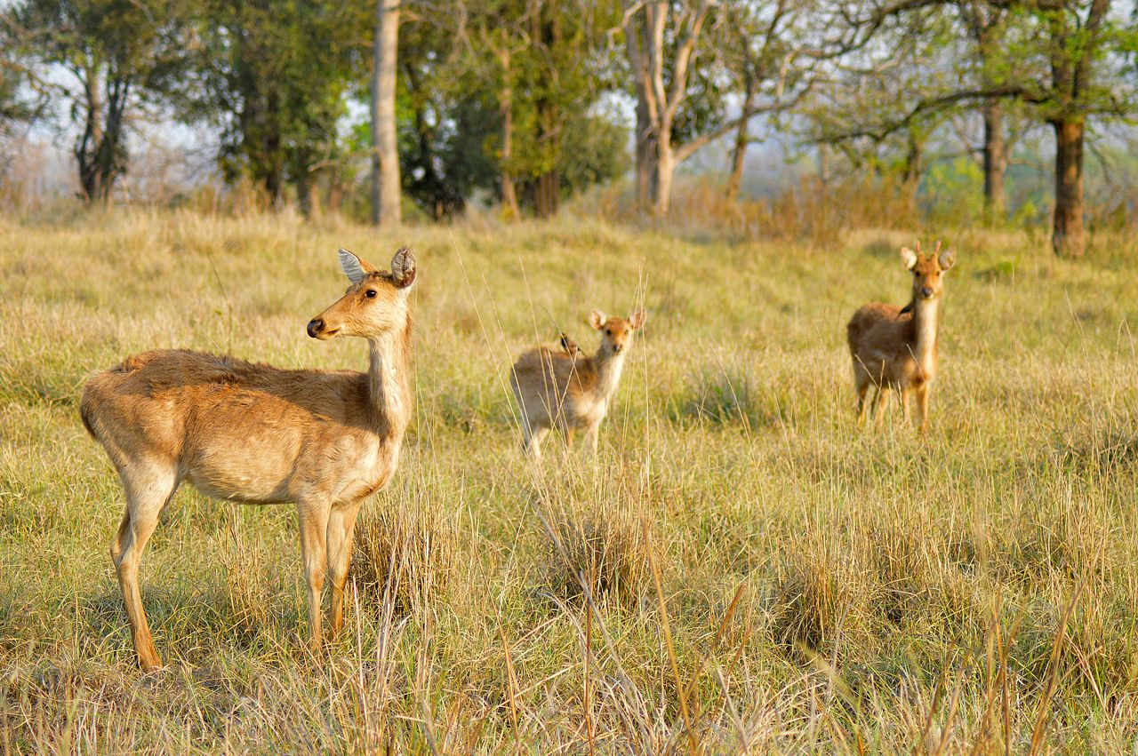 Perfect Time To Visit Kanha Forest