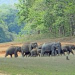 Periyar National Park - Amazing National Park in Kerala
