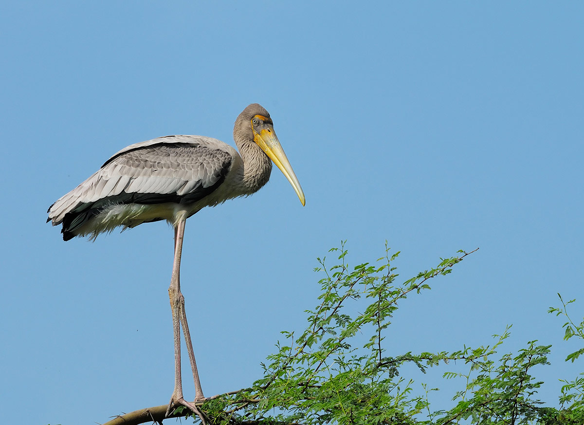 Top Destination in Lakshadweep Islands-Pitti Bird Sanctuary