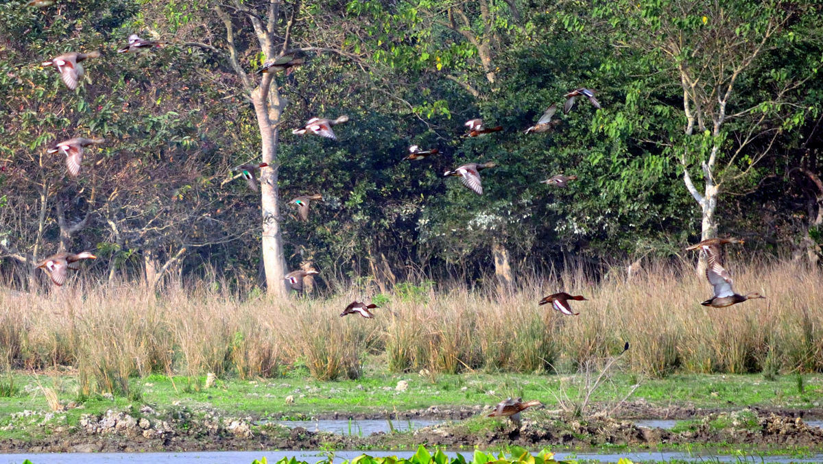 Must-Visit Place in Guwahati-Pobitora Wildlife Sanctuary