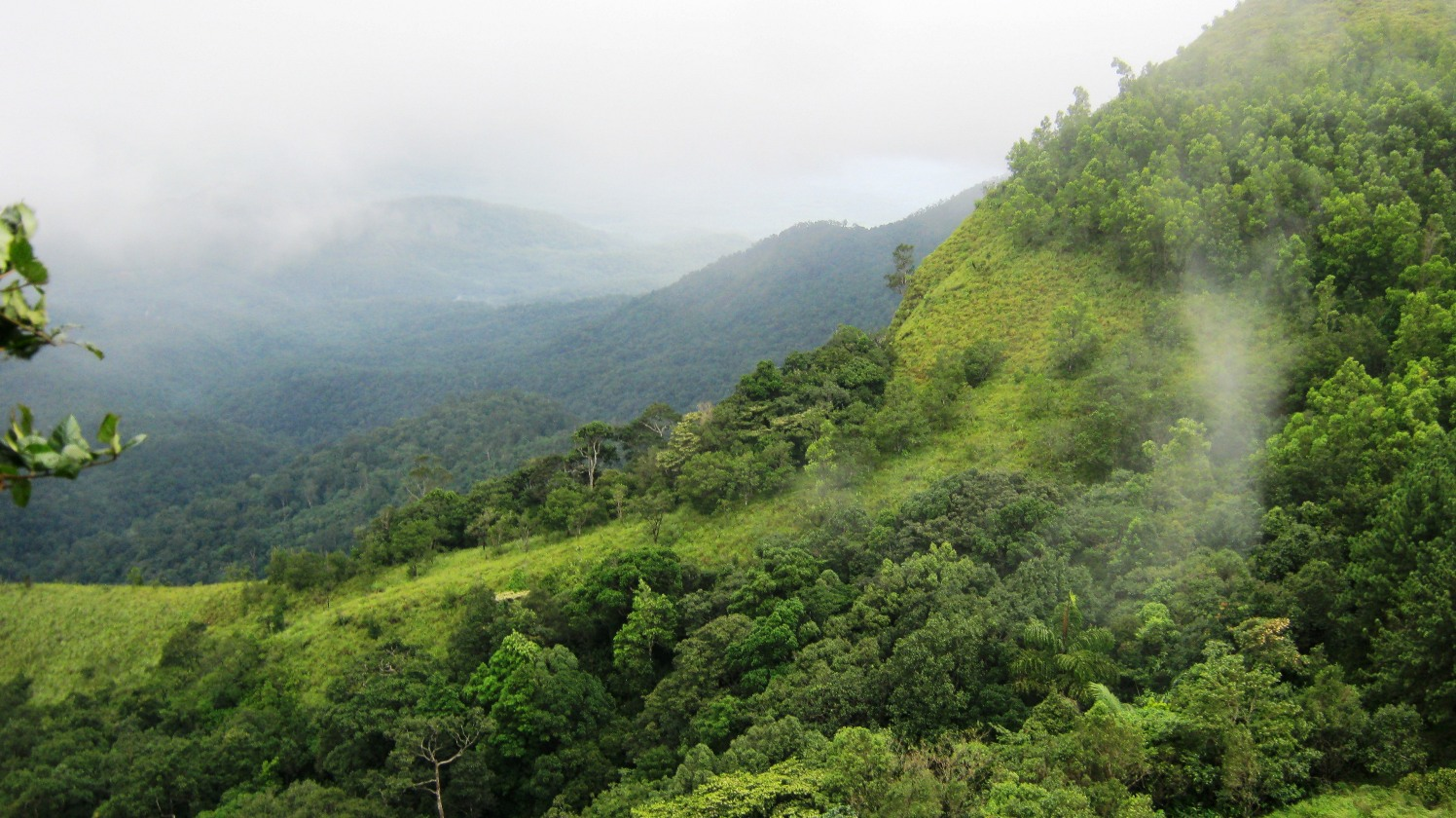 Ponmudi Must-Visit Hill Station Within 500 Kms of Wayanad