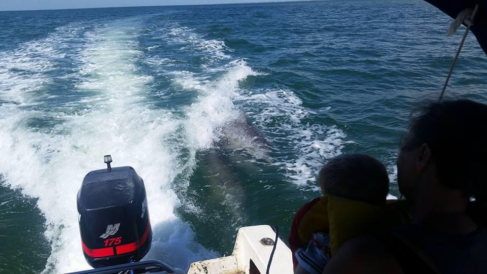 Top-rated Location For A Perfect Weekend Getaway From San Antonio-Port Aransas, Dolphin-Watching Tour