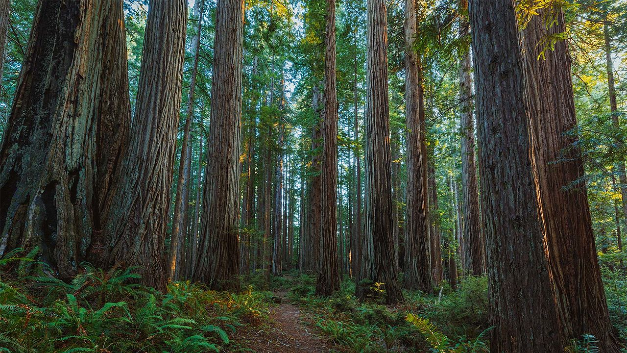 Camping Location In California-Prairie Creek Redwoods State Park