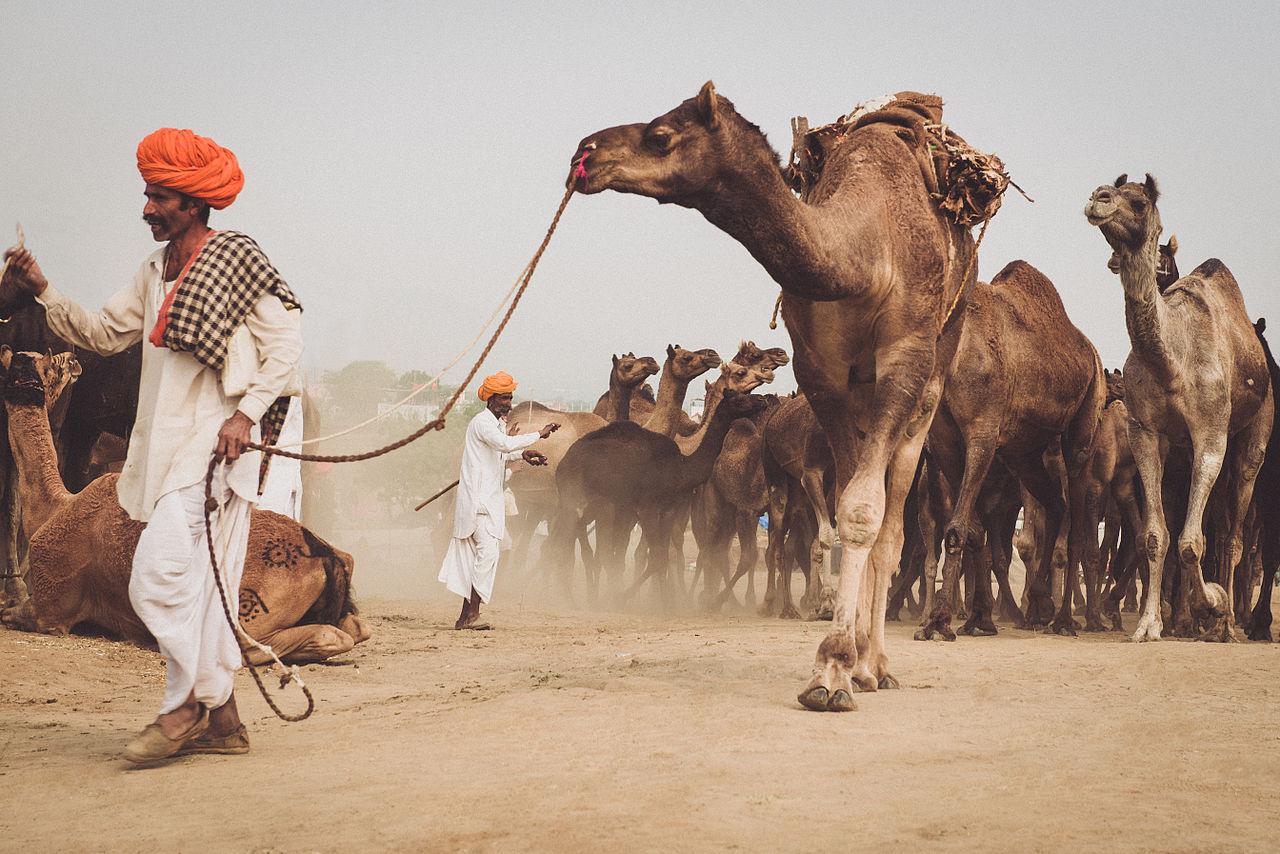Attraction Desert Destination in Rajasthan-Pushkar