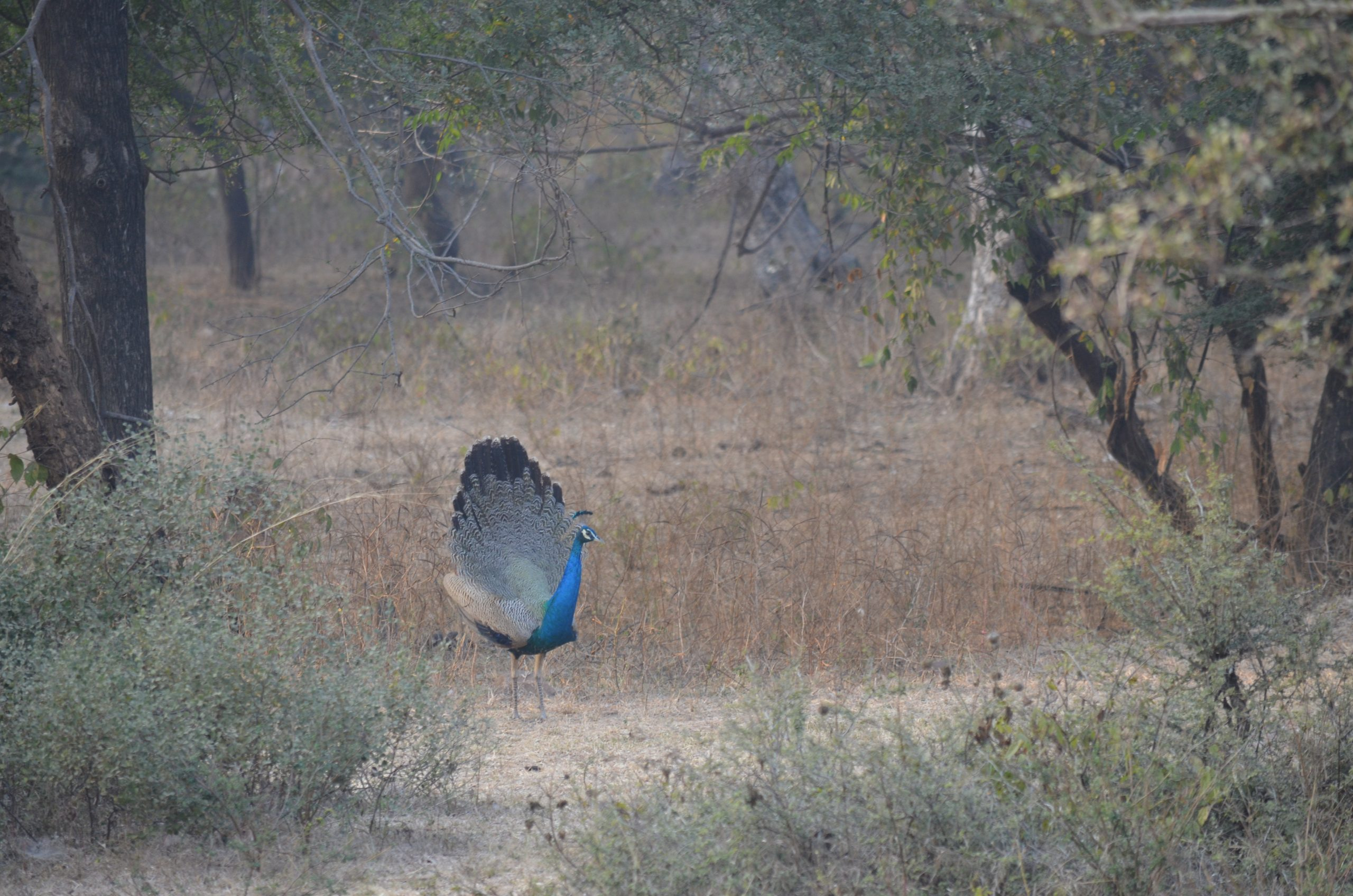 Ranthambore Forest Reserve