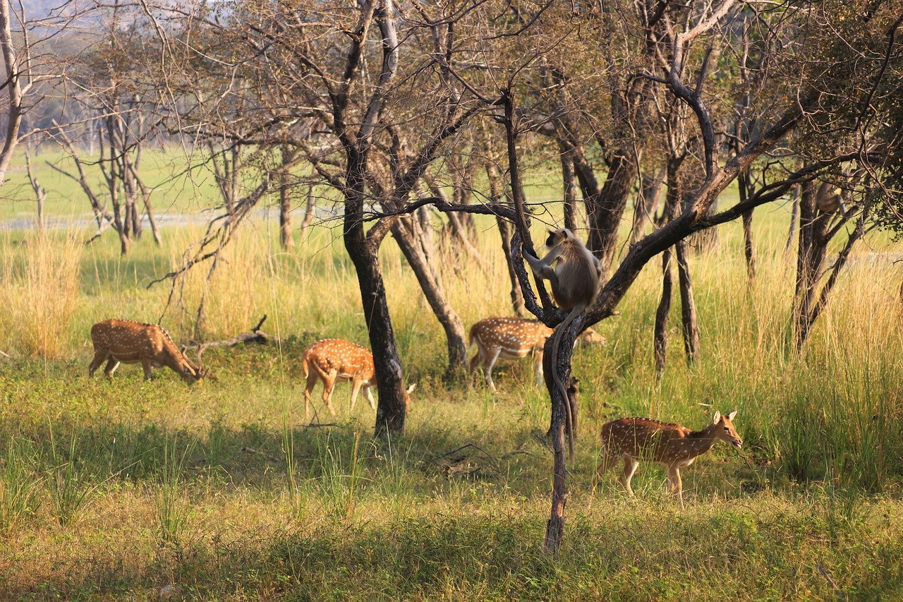 Popular Tourist Place to Visit in Ranthambore, Rajasthan-Ranthambore National Park