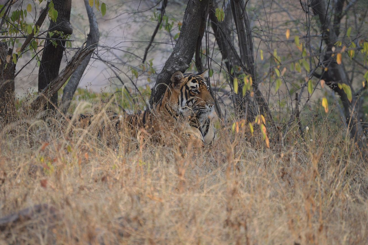Ranthambore National Park - Famous National Parks In Rajasthan