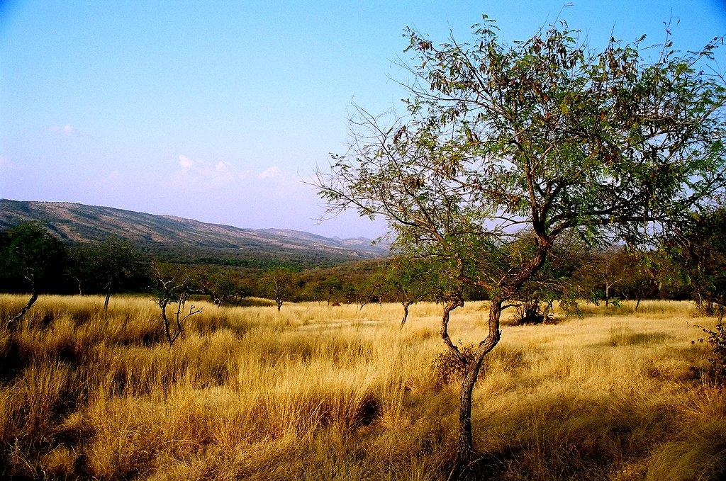Weekend Getaway from Gwalior-Ranthambore wildlife sanctuary, Ranthambore