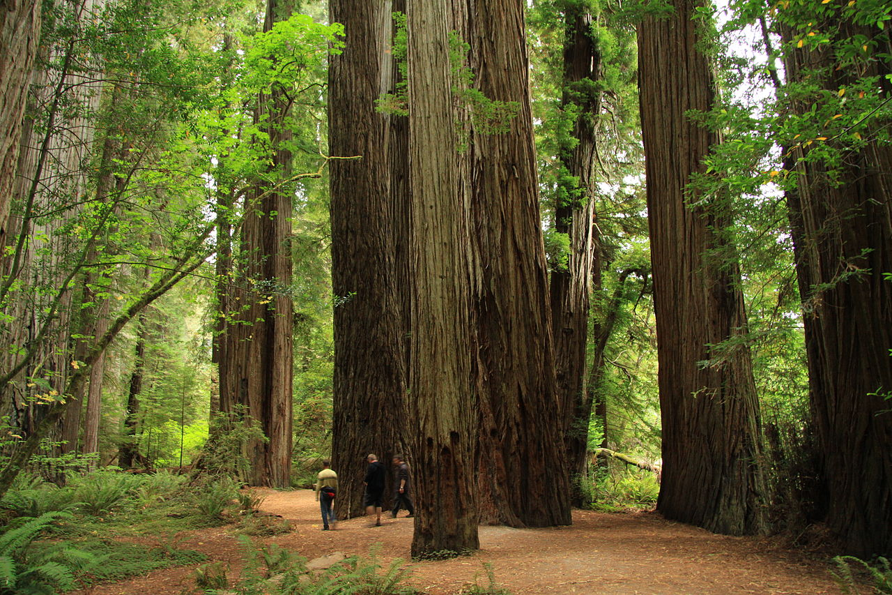 Top Destination in California for Road Trips-Redwoods State Park, Humboldt County