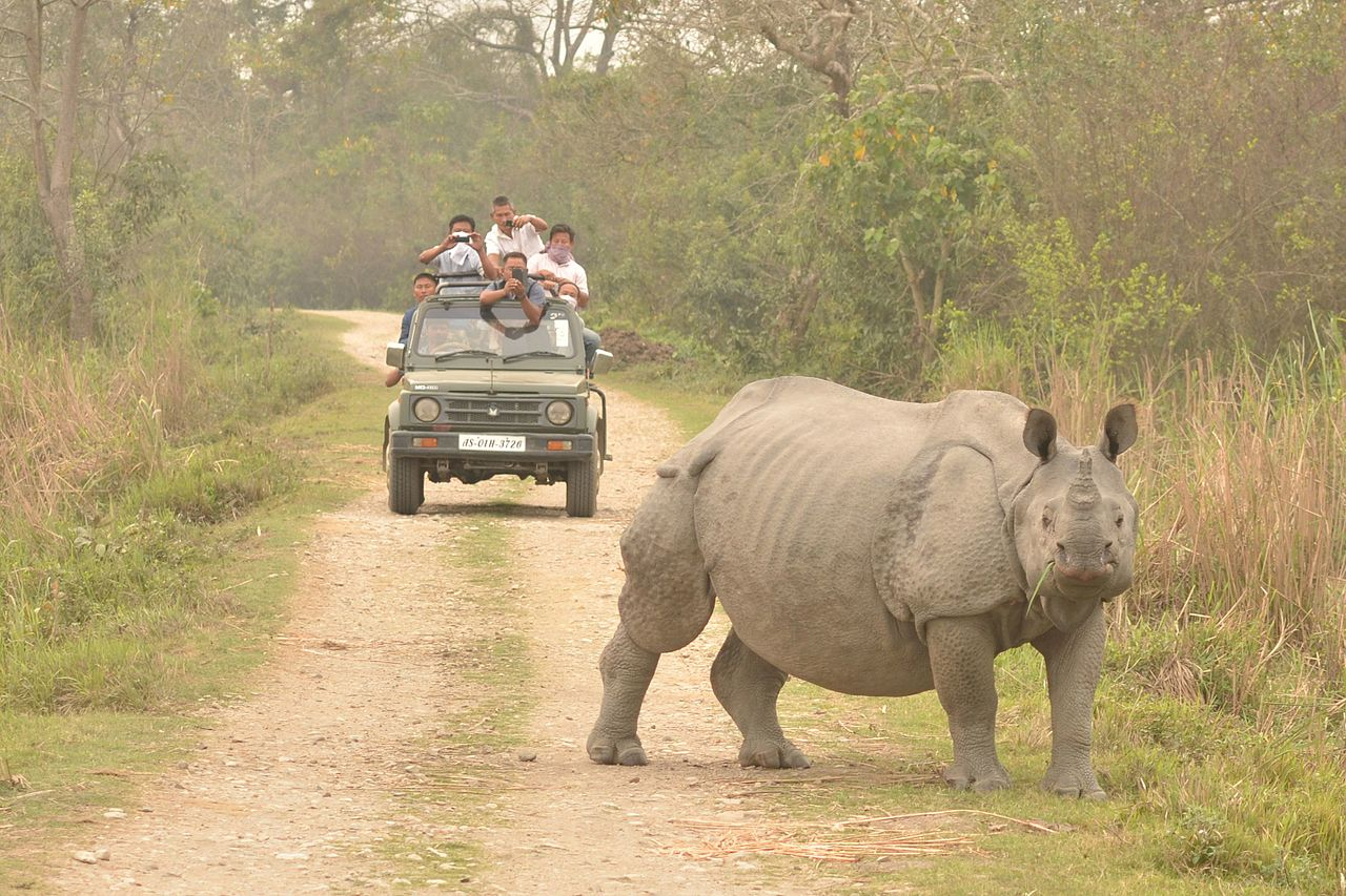Top Things To Do In North East India-Indian Rhinoceros In Kaziranga National Park, Assam