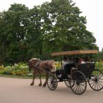 Ride the Horse Carriage in Mackinac Island - The Best Outdoor Activity In Mackinac Island