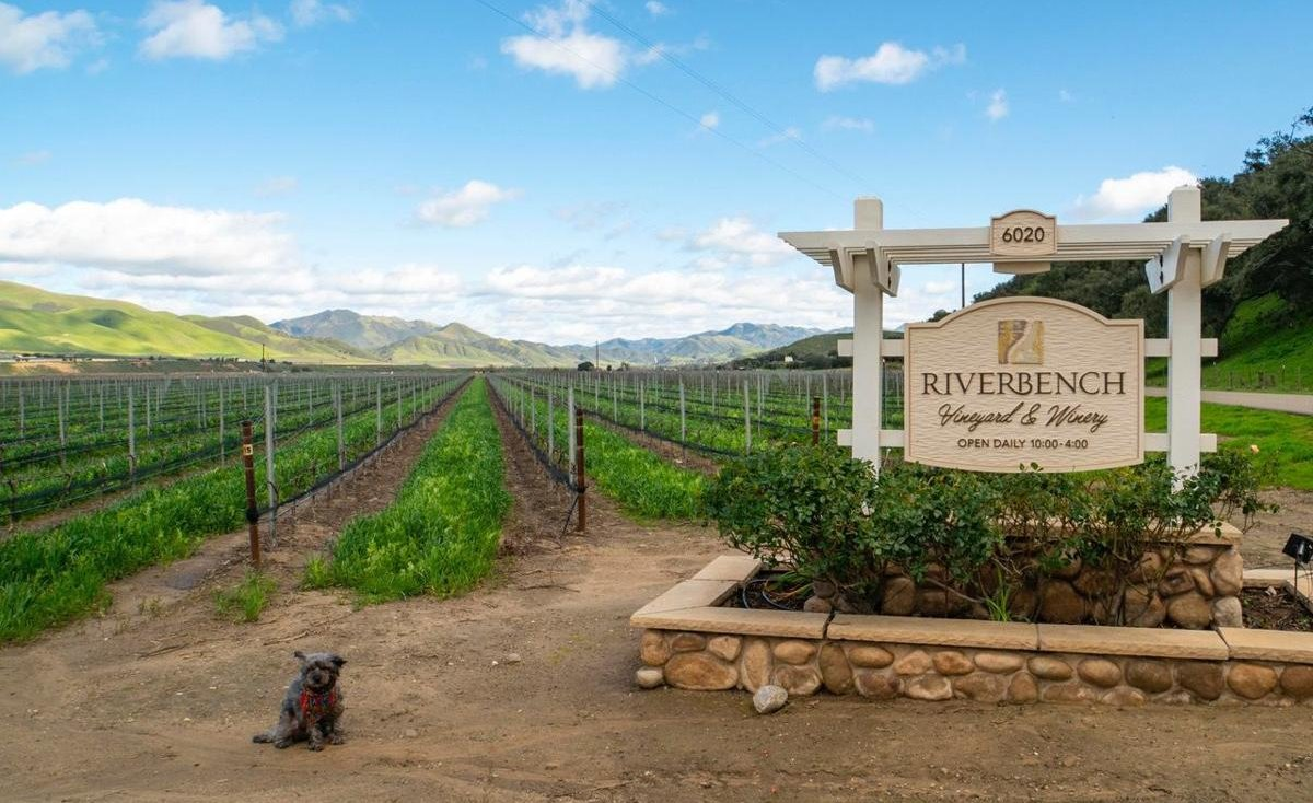 Top-Rated Wineries and Vineyards in Santa Maria