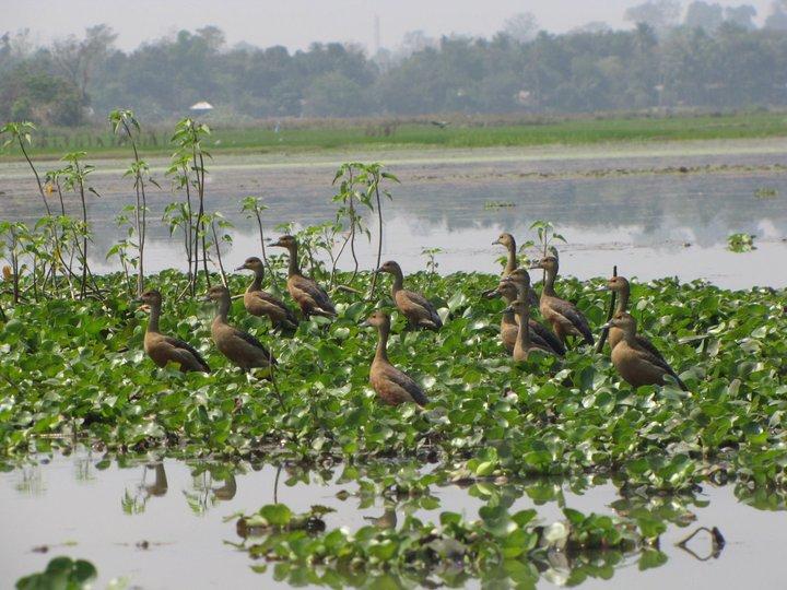 Place to see in around Melaghar-Rudrasagar Lake (Twijilikma)