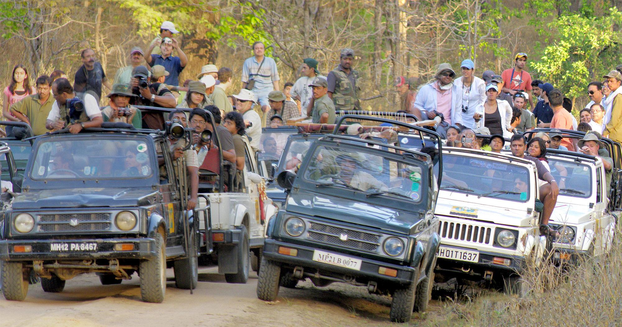 Safaris Available At Kanha National Park-Jeep Safari