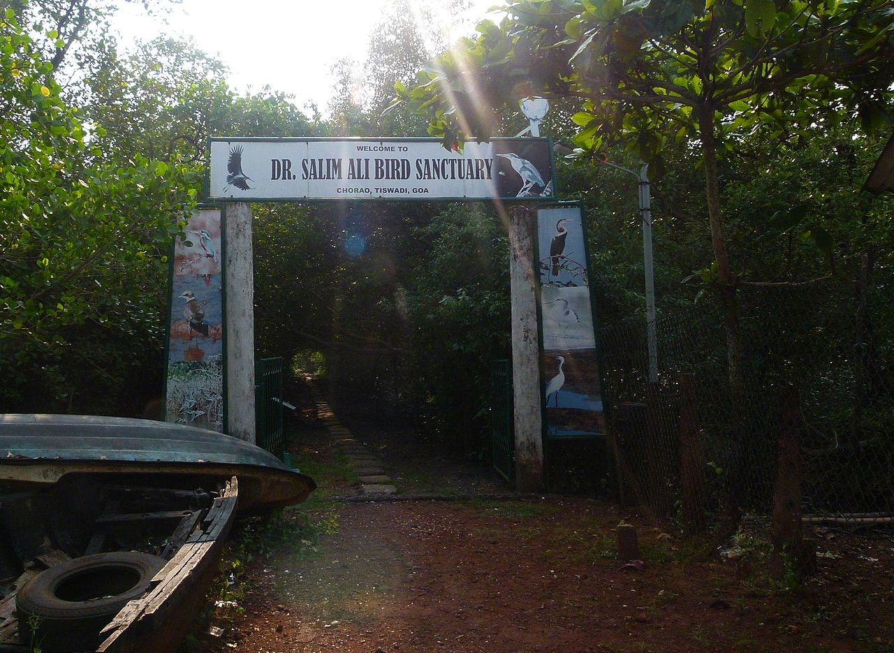 Amazing Place To Visit Around Dona Paula-Salim Ali Bird Sanctuary