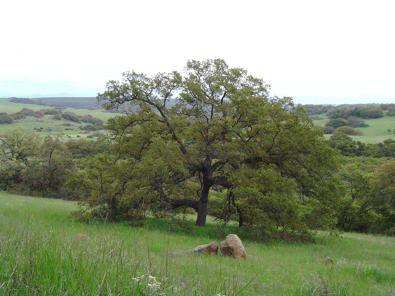 Must Visit Place in Temecula-Santa Rosa Plateau