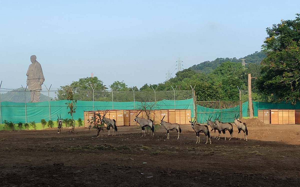 Places Near Statue of Unity in Gujarat-Sardar Patel Zoological Park and Safari