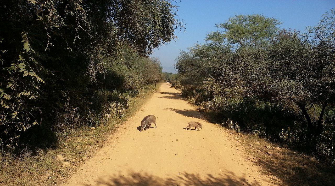 Best Place to Visit in Alwar-Sariska Wildlife Sanctuary