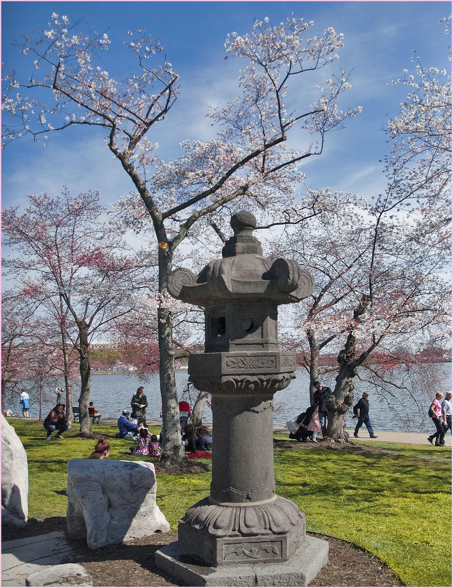 Say Springggggg at the National Cherry Blossom Festival, Washington DC