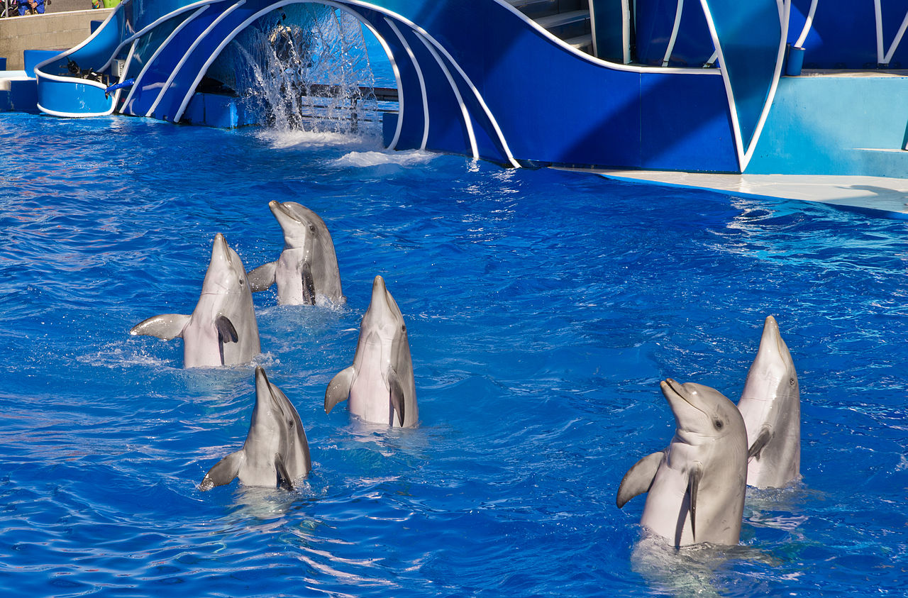Best Fun Place For Kids Visit In The USA-SeaWorld San Diego