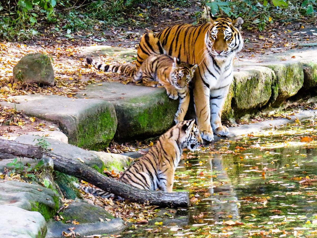 Best Place to see in around Melaghar-Sepahijala Wildlife Sanctuary