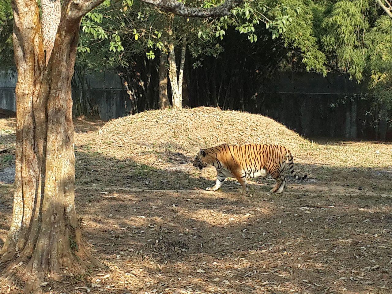 Visit Sepahijala Wildlife Sanctuary, Tripura,  India
