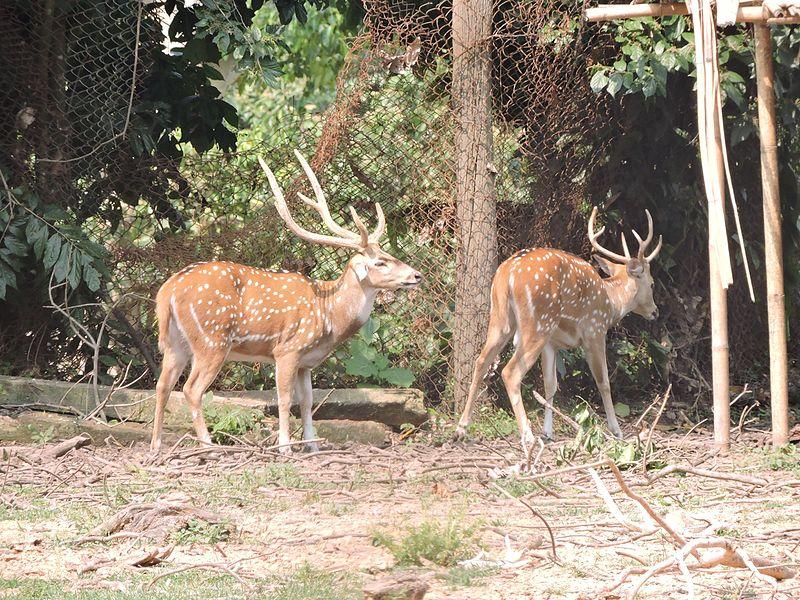 Sepahijala Wildlife Sanctuary (Tripura) Travel Guide