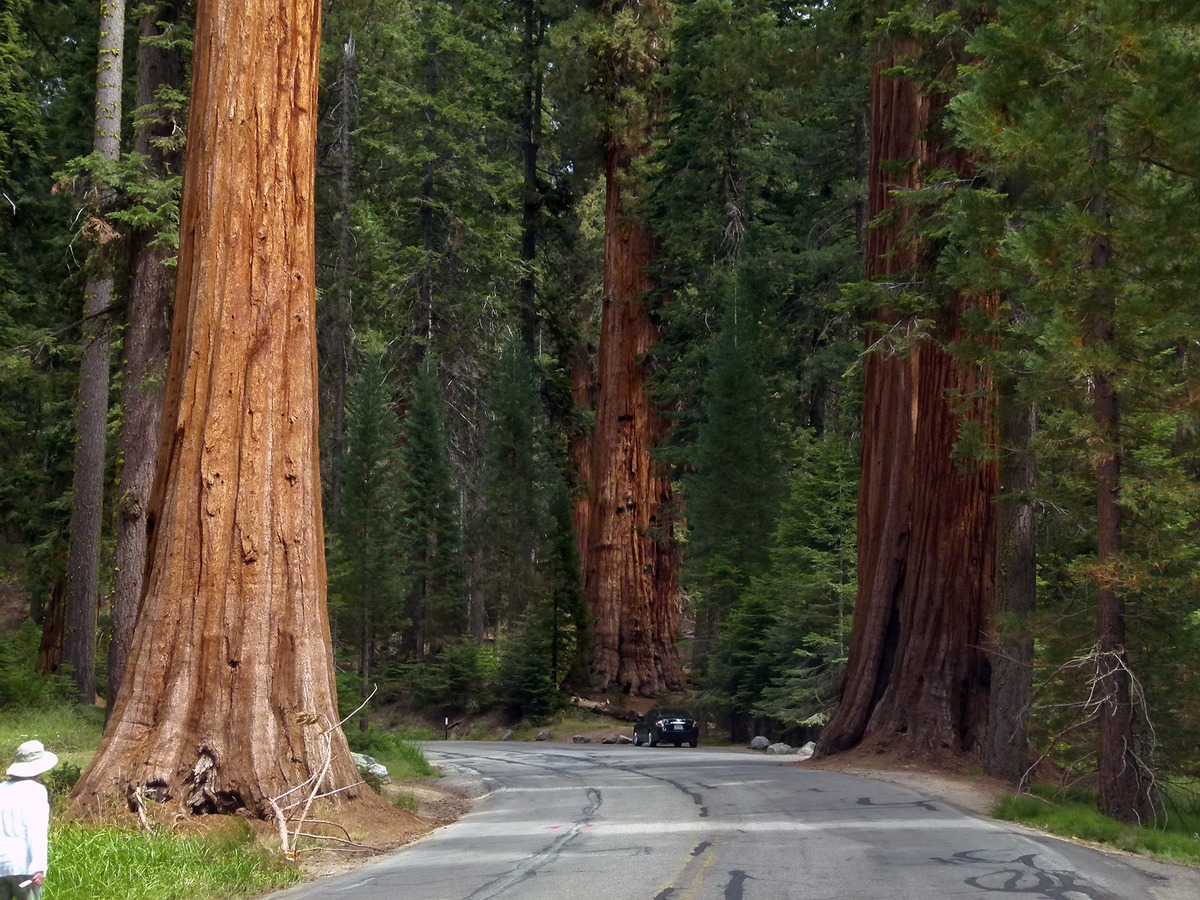 Famous National Park in California-Sequoia National Park