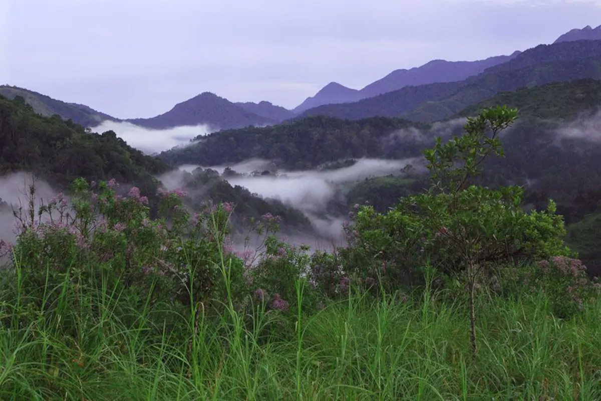 Top Sightseeing Spot to See in Pedong-Silent Valley