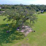Singing Oak - Popular Things to do in Louisiana