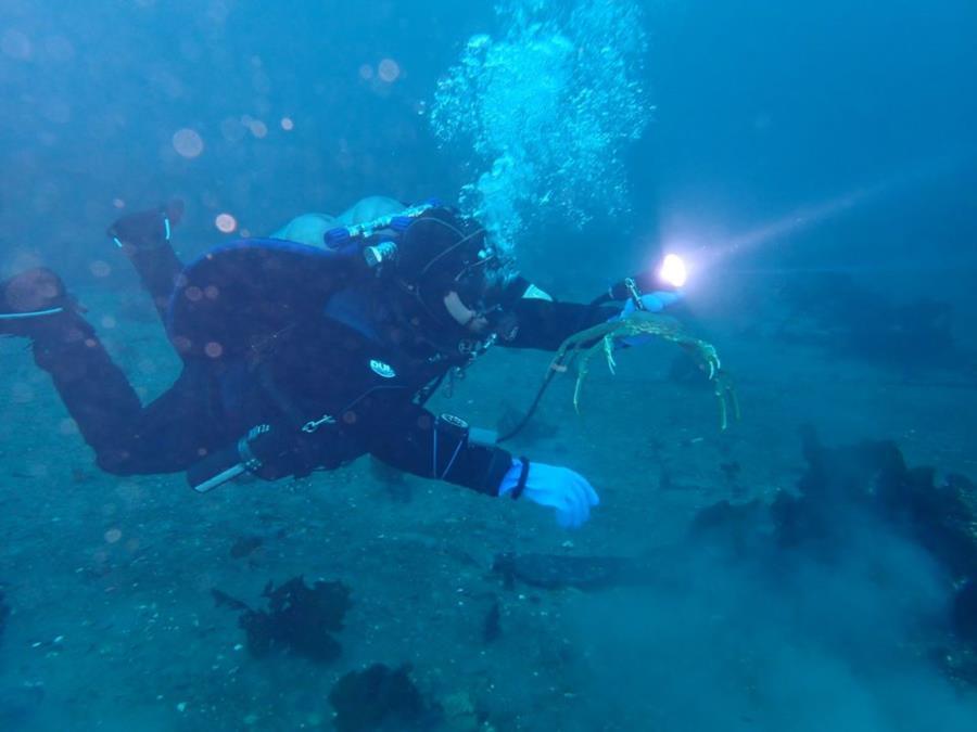 Smitty's Cove, Whittier Scuba Dive