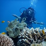 Snorkeling - Best Outdoor Activities To Do in Andaman And Nicobar Islands