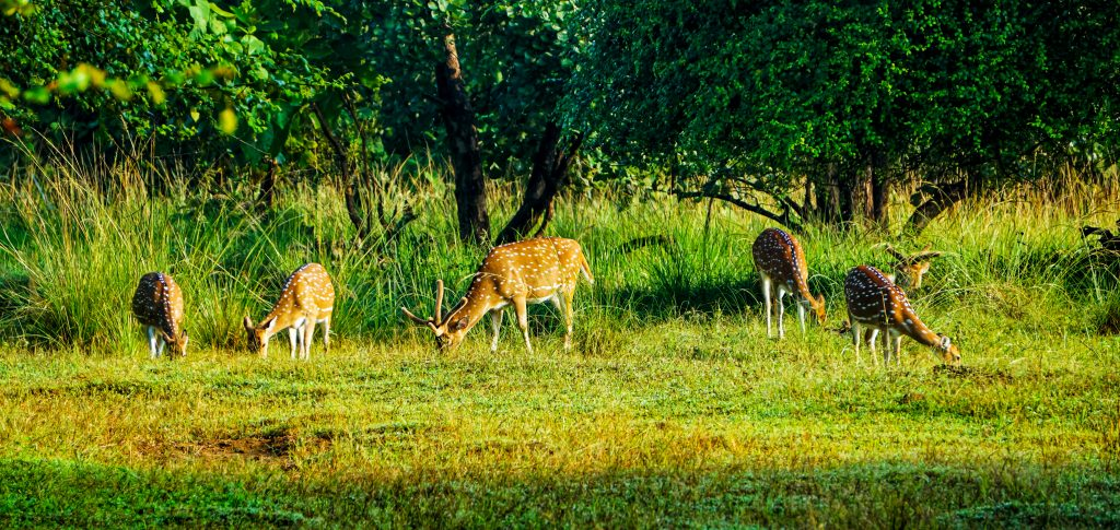 Amazing Things To Do At Dantewada, Chhattisgarh-Spend A Day With Nature