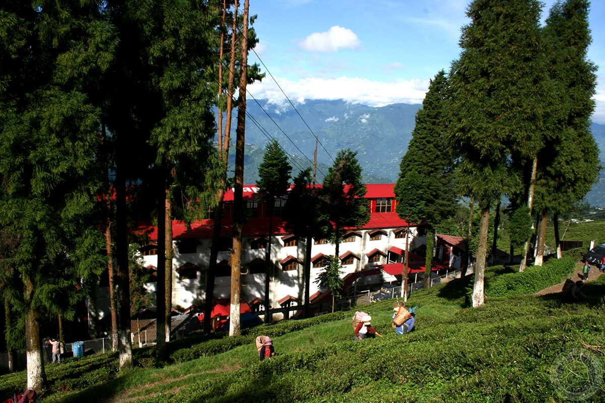 Spending A Peaceful Day At The Peace Pagoda | Things in Darjeeling That Every Traveler Must Do