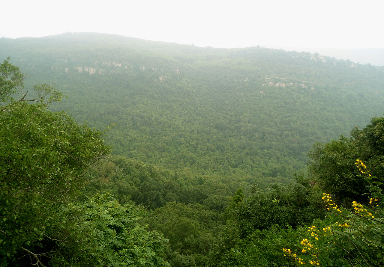 Place To Visit Nearby Srikalahasti Temple-Sri Venkateswara National Park